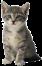 Cat_Clutter